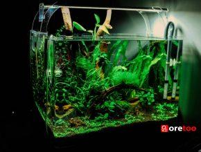 aquarium-ebay